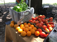 Forsyth Farmers Market produce in Savannah Georgia's Forsyth Park on Saturday