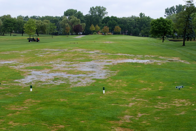 Poa trivialis fairway poor drainage