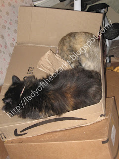 Katya and Niki sleeping in a box