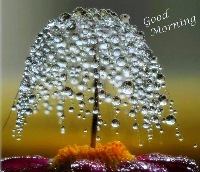 dewdrops-tree-flower-wallpaper-good-morning