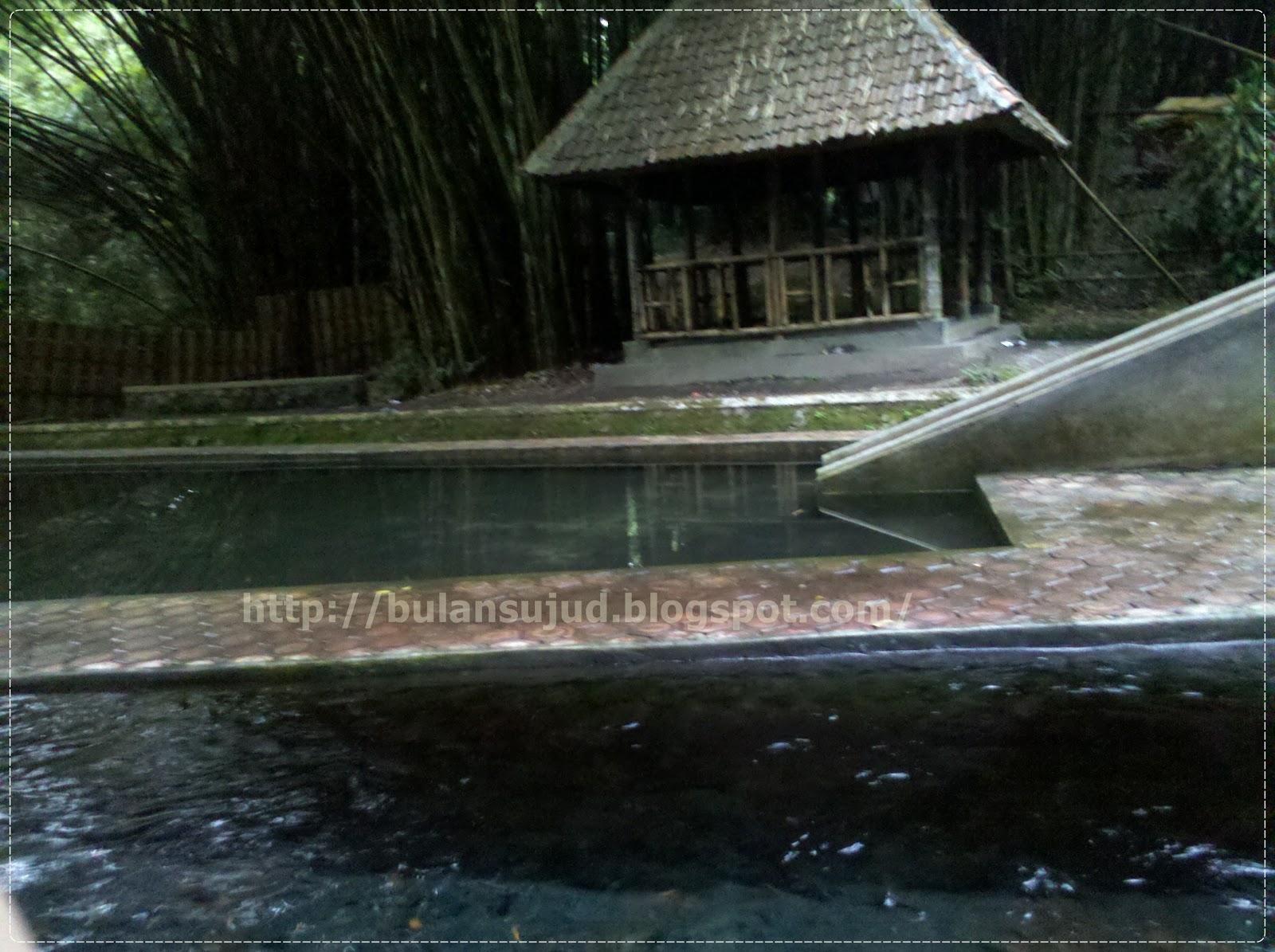 Wisata alam hutan bambu lumajang