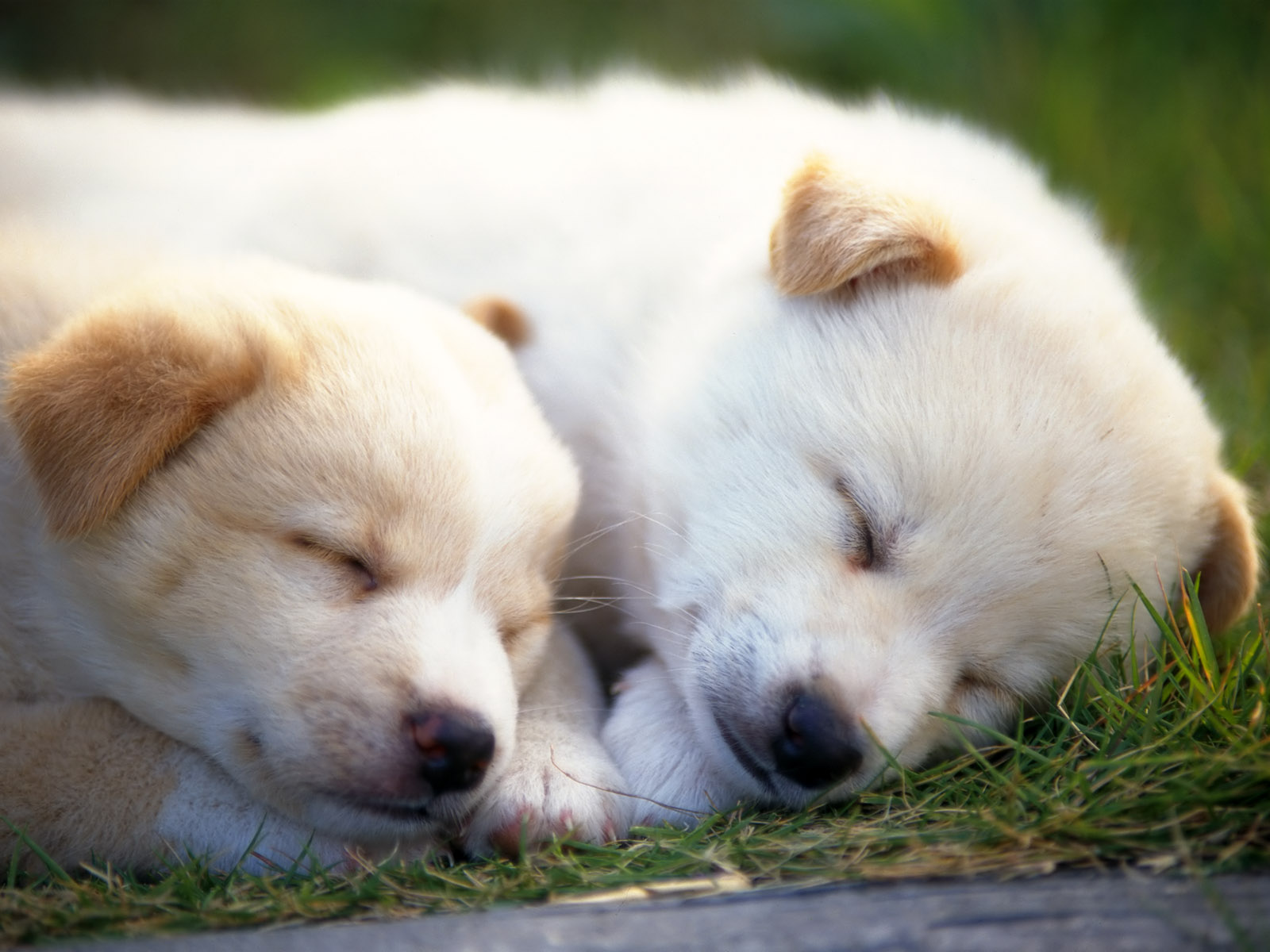 fotos de perritos - photo #31