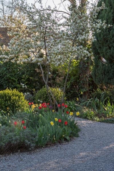 Gartenblog geniesser garten gartenrundgang ende april - Geniesser garten ...