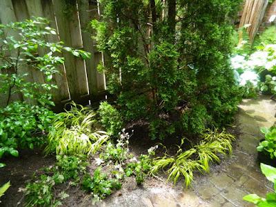 Cabbagetown Toronto shade garden makeover after Paul Jung Gardening Services