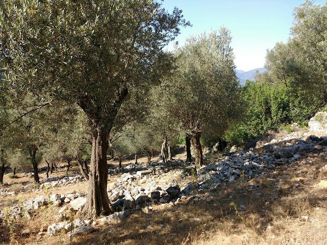 Руины Амоса