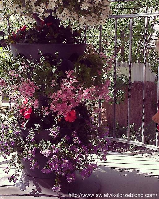 dekoracje kwiatowe na zewnątrz, kwiaty doniczkowe przed domem