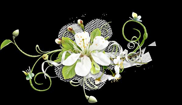 PNGs De Flores Diversas
