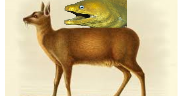 Eel on musk - Teacher: what are you laughing at? Me ...