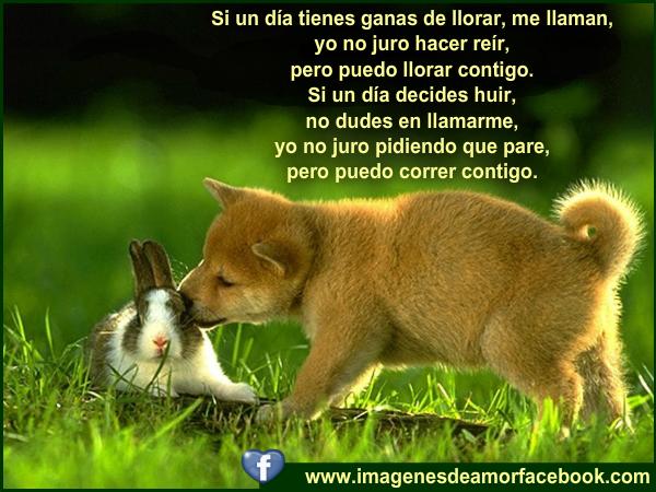 Imagenes Con Frases Bonitas De Amor Gratis: Imagenes Bonitas De Amor Para FaceBook Gratis