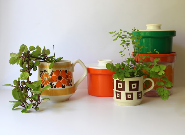 Indoor plants with colourful kitchenware