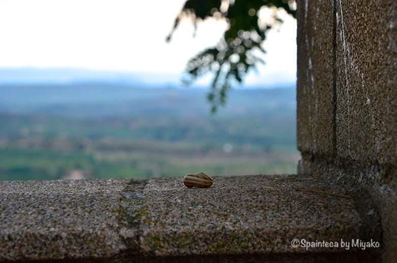 Vineyard's Landscape in La Rioja 北スペインの茶ベージュの縦縞模様があるカタツムリ