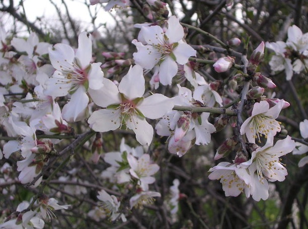 Fragmenta l 39 essenza dei fiori for Albero da frutto nano
