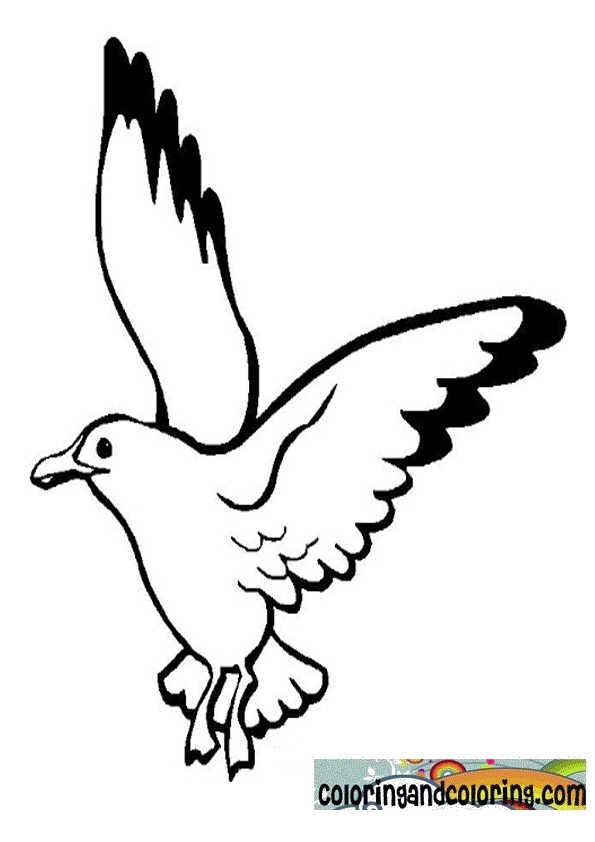 Seagull Printable Coloring Pages