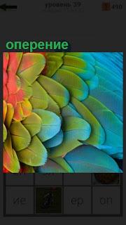 разноцветное красивое оперение у птицы