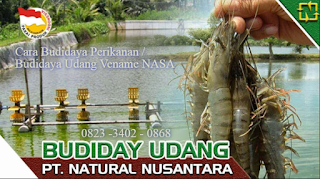 AGEN NASA DI Nisam Aceh Utara - TELF 082334020868