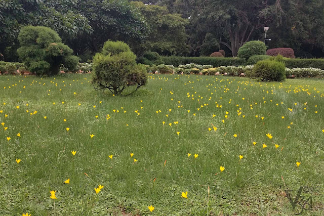 Flowers bloomed at the Lalbagh botanical gardens