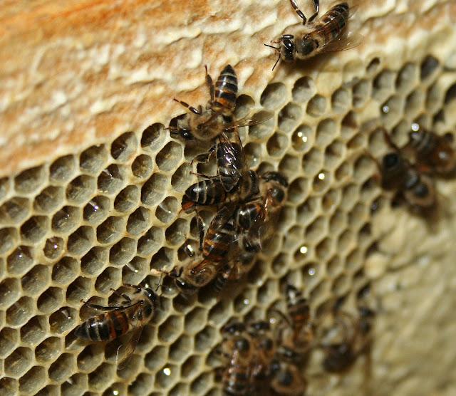 Πωλείται μέλι στην Χαλκιδική