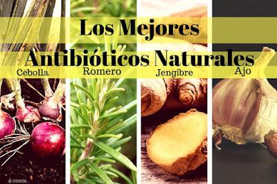 Antibióticos naturales en Terapias y Remedios naturales
