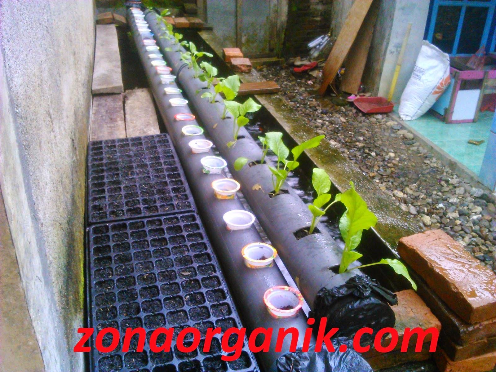 Cara Membuat Pupuk Organik Cair untuk Tanaman Hidroponik