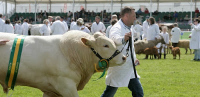 Huge prize bull at the Royal Cornwall Show