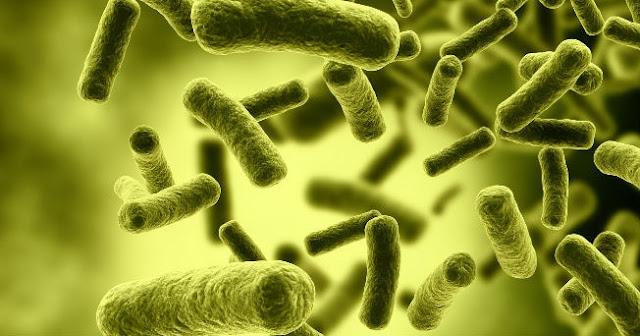 NOTICIAS DE VAPEO Bacterias intestinales en Vapers Igual que los no fumadores