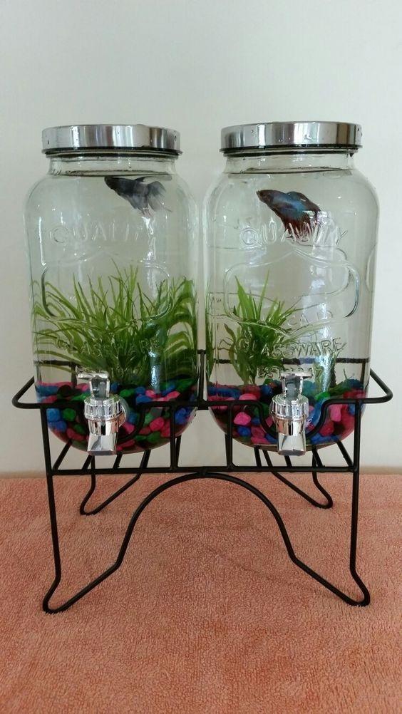 Image Cool Betta Fish Tanks