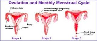 menstruasi saat hamil itu tidak mungkin