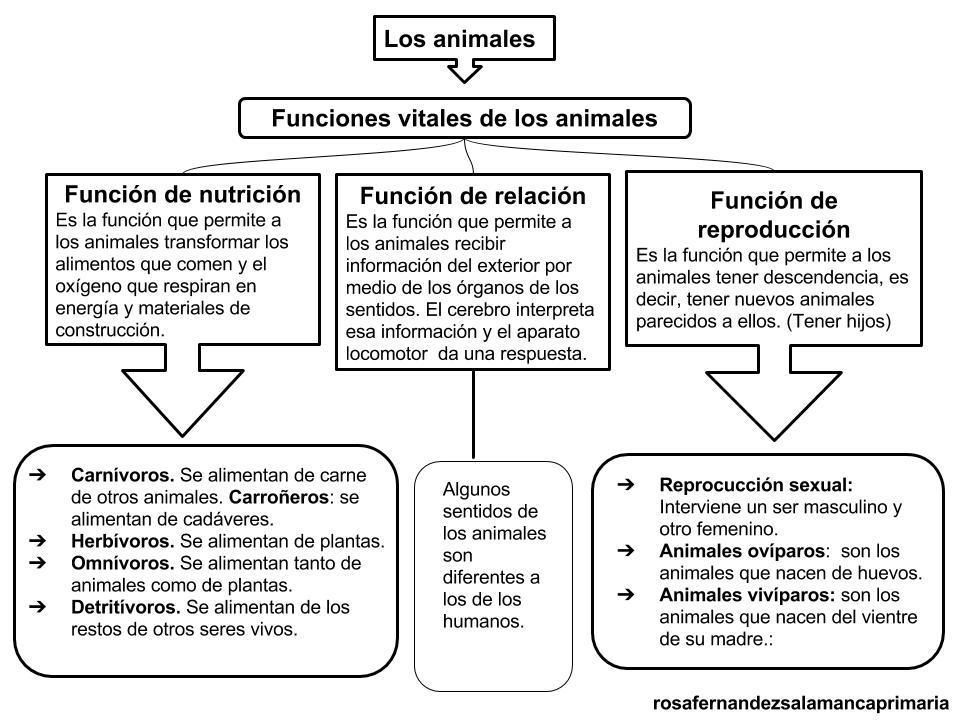 Dibujos Para Colorear De Animales Invertebrados Y Vertebrados: Maestra De Primaria: Esquema Del Tema Los Animales