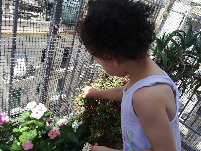 Il fascino dell'analogico e l'amore verso le piante