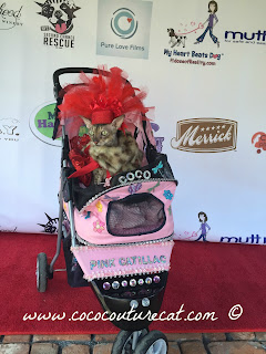 Coco the Couture Cat's Pink Catillac stroller
