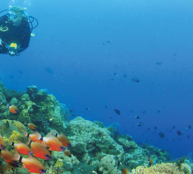 Diving di Bunaken