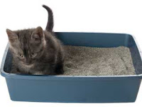 Small gray kitten in small littterbox