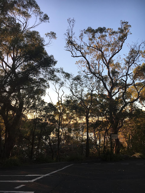 Early Mornings in Oatley Park