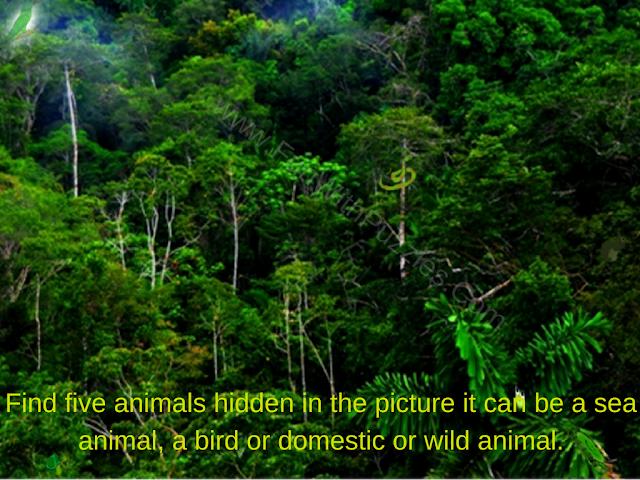Five Hidden Animal Puzzle Image
