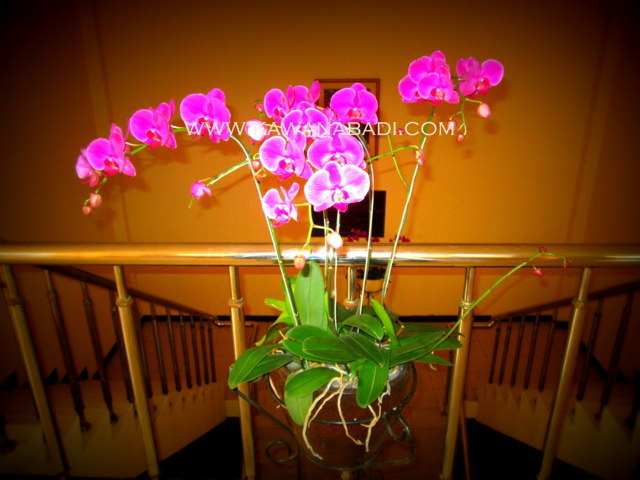 Melayani rental bunga dan dekorasi untuk seminar, perkantoran, dan wedding