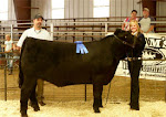 2011 Reserve Champion Steer