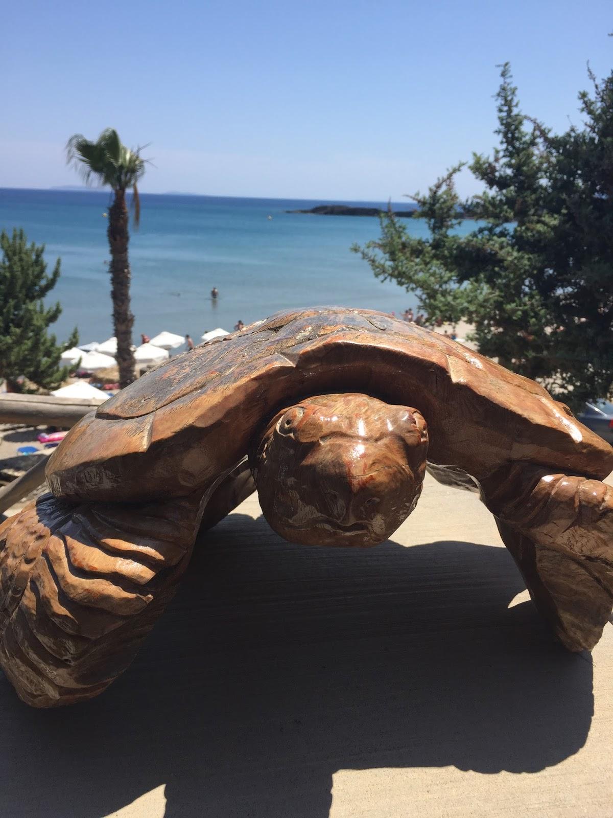 tartaruga-praia