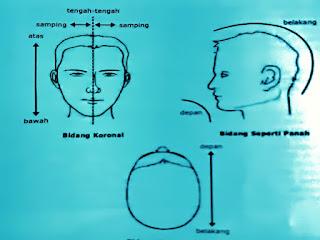 Gambar Terminologi Posisi Bagian Otak