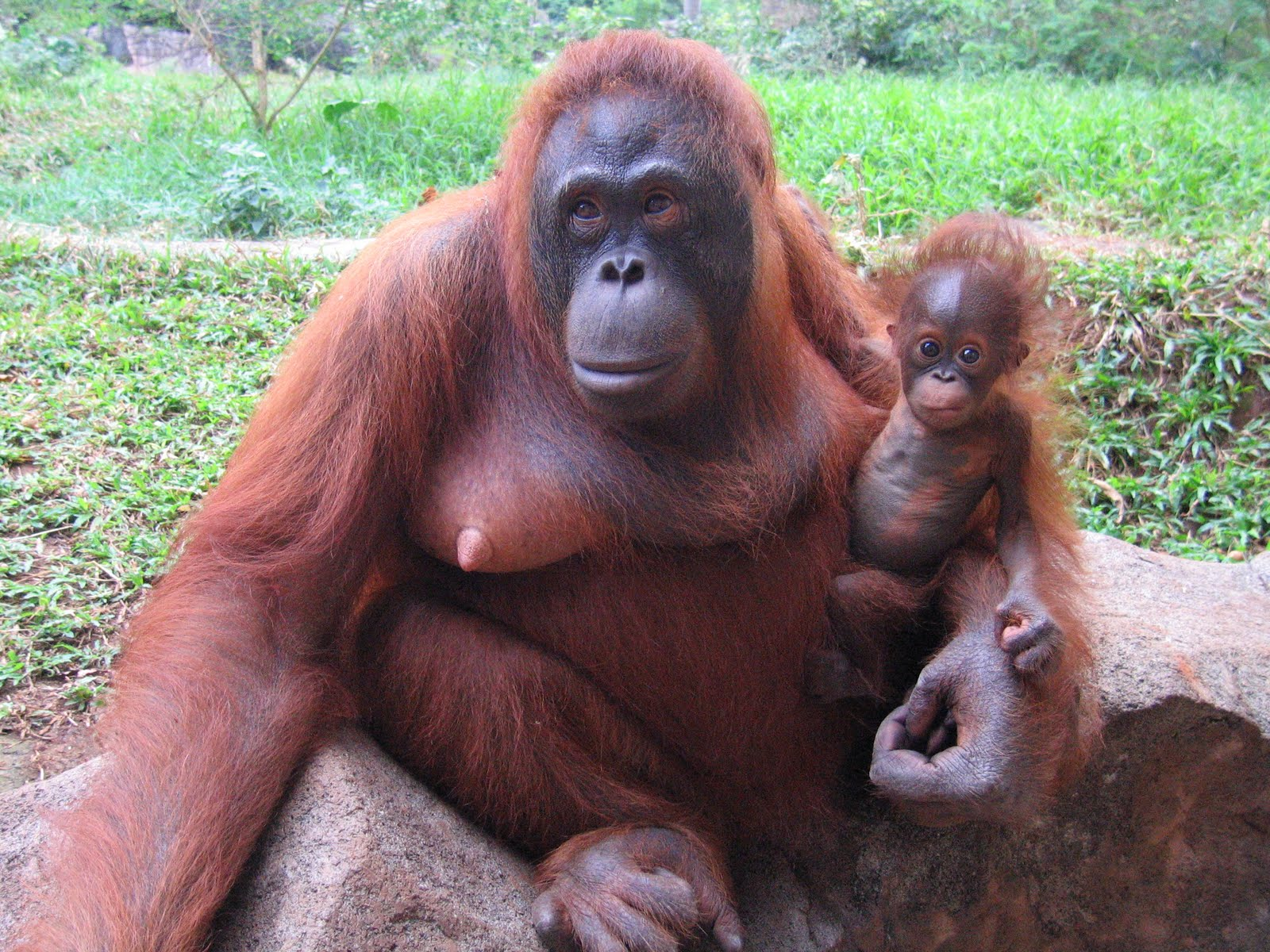 Sex xxx orangutan hentai images