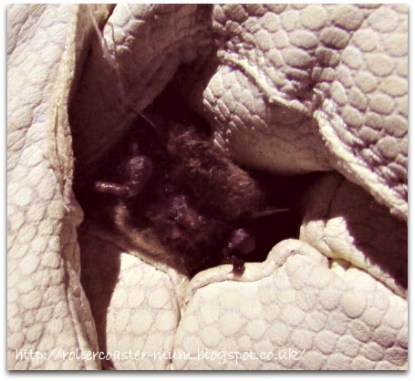 Whiskered Bat, about to be released