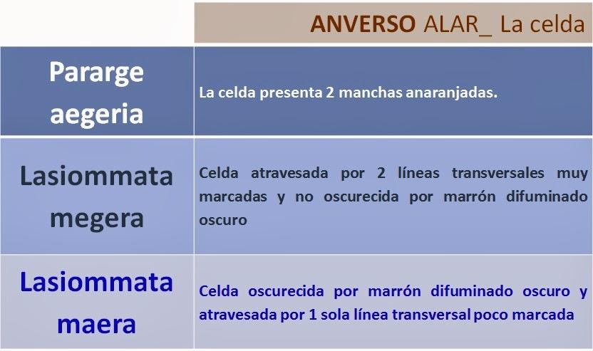 Celda de Pararge aegeria, Lasiommata megera y Lasiommata maera