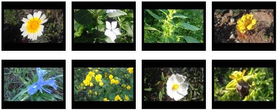 175 vídeos más de Flores y Plantas con flores II