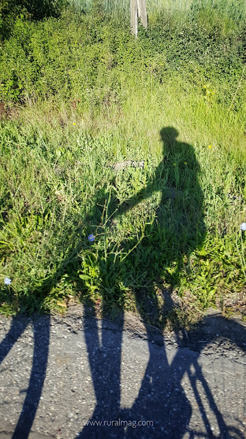 Shadow of woman riding a bike reflected onto grass beside road
