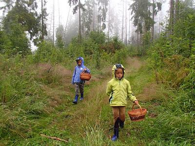 Grzyby w deszczu, deszczowy las, grzyby w lipcu, grzybobranie w deszczu, grzyby na Orawie, grzyby pod Babią