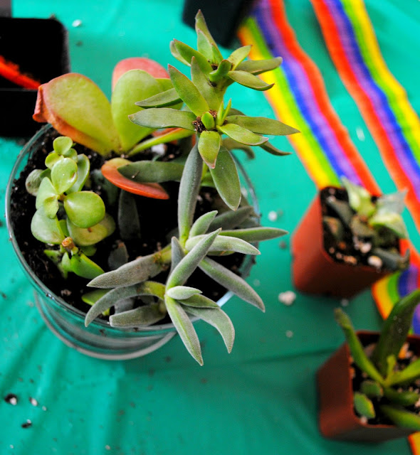 Succulent workshop success at Fizzy Party's workshop