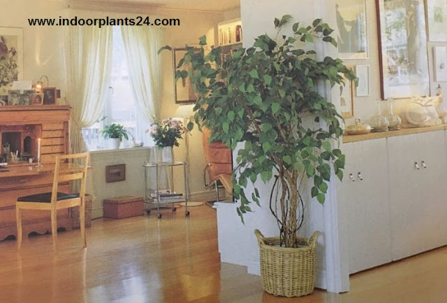 indoor plants decoration ideas