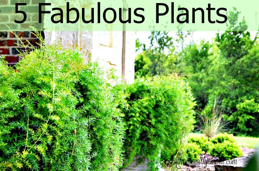 fern-hanging-basket-garden-gardening-athomewithjemma