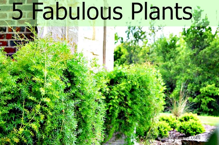 5 Fabulous Plants You Must Have