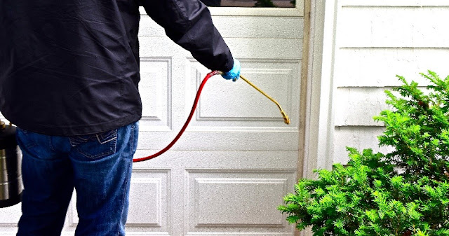 How to Find Reliable Pest Control in Toronto - Home Design my