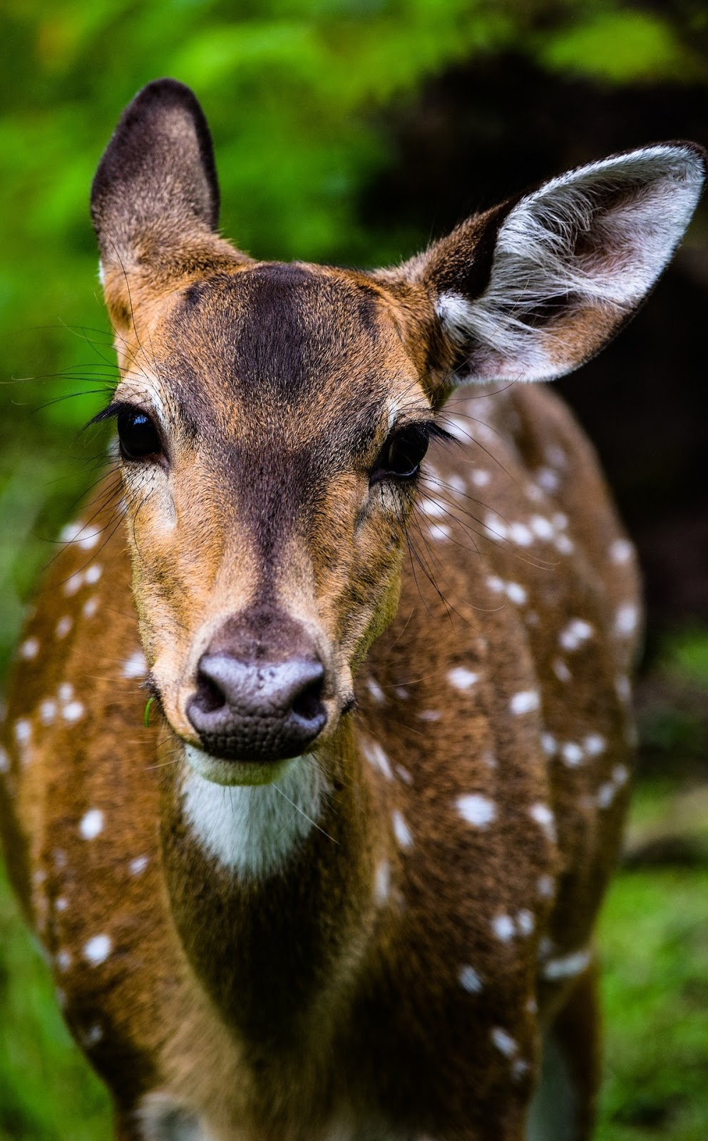 Face of a deer.
